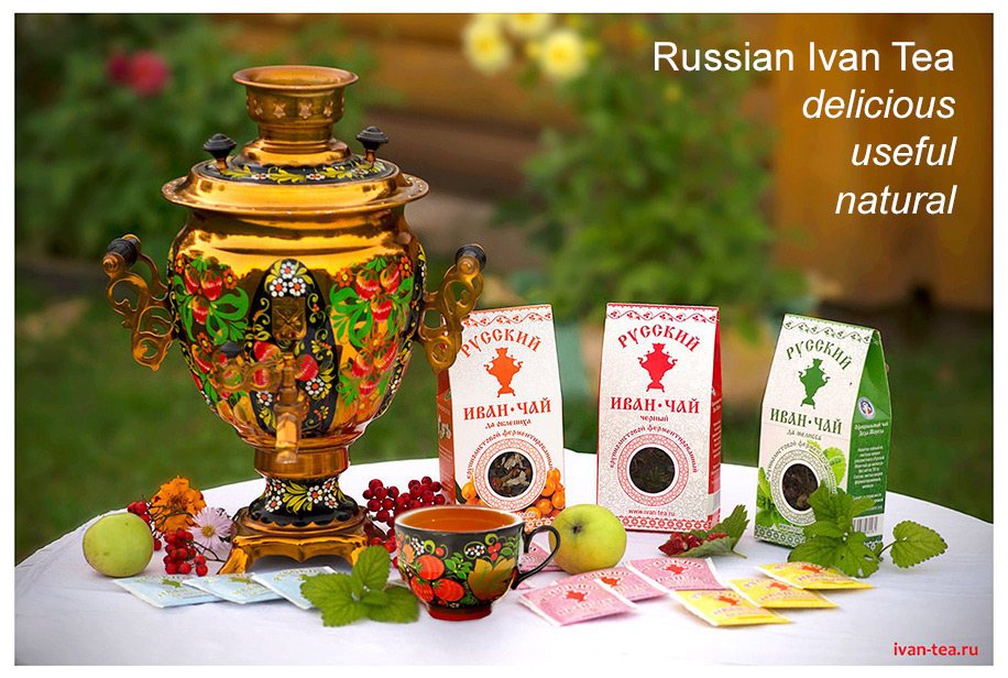 Russian Ivan Tea: delicious, useful, natural